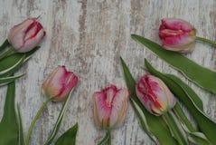 Fermez-vous du bouquet frais rose de ressort des fleurs de tulipe au-dessus de Gray Wooden Background rustique avec l'espace de c images libres de droits