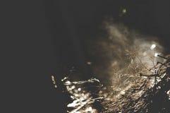 Fermez-vous du brouillard et du courant d'arbre du bois Images libres de droits