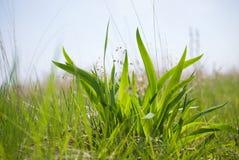 Fermez-vous du buisson de l'herbe verte fraîche sur un fond de ciel photographie stock libre de droits