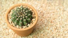 Fermez-vous du cactus formé Image libre de droits