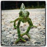 Fermez-vous du caméléon vert Photographie stock libre de droits