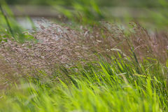 Fermez-vous du champ de l'herbe Image libre de droits
