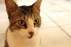 Fermez-vous du chat Image stock