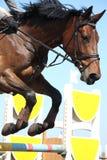 Fermez-vous du cheval sautant d'exposition photo libre de droits