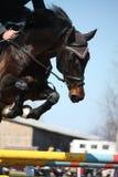 Fermez-vous du cheval sautant d'exposition Photos libres de droits
