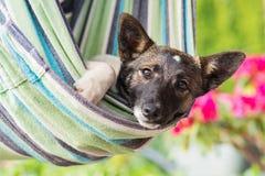 Fermez-vous du chien heureux se situant dans l'hamac rayé Image stock