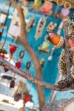Fermez-vous du gland brun sur une branche Photo libre de droits