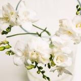Fermez-vous du groupe blanc d'orchidée dans le vase Photographie stock