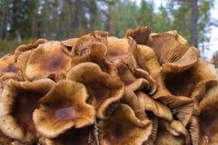 Fermez-vous du groupe sauvage de champignon photographie stock