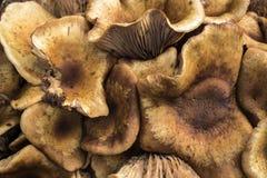 Fermez-vous du groupe sauvage de champignon Images libres de droits