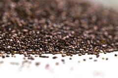 Fermez-vous du hispanica de Salvia de graines de chia sur un fond d'isolement par blanc Photo stock