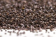 Fermez-vous du hispanica de Salvia de graines de chia sur un fond d'isolement par blanc Images stock