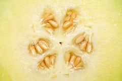 Fermez-vous du melon de cantaloup Photo libre de droits