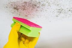 Fermez-vous du moule de nettoyage de main du plafond Images stock