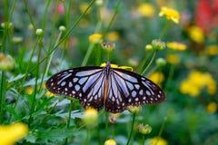 Fermez-vous du nectar de recherche de papillon sur une fleur Photo stock