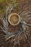Fermez-vous du nid vide d'oiseau avec les branches tourbillonnées photographie stock libre de droits