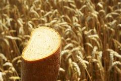 Fermez-vous du pain avant champ de maïs Image libre de droits