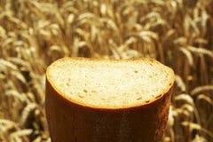 Fermez-vous du pain avant champ de maïs Photos stock