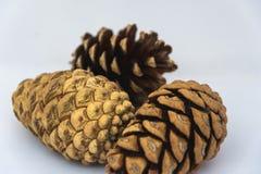 Fermez-vous du pinecone trois sur un fond blanc Image stock
