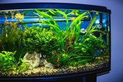 Fermez-vous du réservoir plein d'aquarium de poissons photos libres de droits