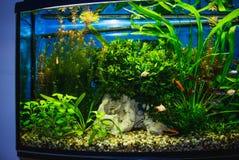 Fermez-vous du réservoir plein d'aquarium de poissons photos stock