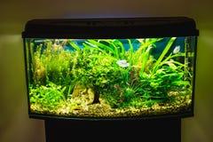 Fermez-vous du réservoir plein d'aquarium de poissons photographie stock libre de droits