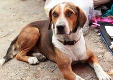 Fermez-vous du regard de chien Photographie stock libre de droits