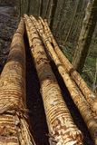 Fermez-vous du rondin empilé, texture en bois Images libres de droits