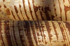 Fermez-vous du rondin empilé, texture en bois Photo libre de droits