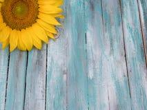 Fermez-vous du tournesol sur le fond en bois Photographie stock libre de droits