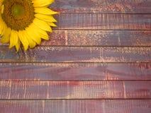 Fermez-vous du tournesol sur le fond en bois Photo stock