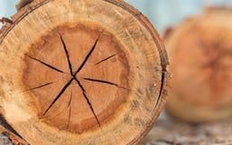 Fermez-vous du tronc d'arbre dans la forêt tropicale en Thaïlande images stock
