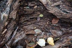 Fermez-vous du tronc d'arbre tombé avec des feuilles images libres de droits