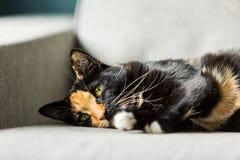 Fermez-vous du visage d'un chat de noir et de gingembre Photos libres de droits