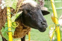 Fermez-vous du visage de moutons dans le jardin l'après-midi ensoleillé Photographie stock