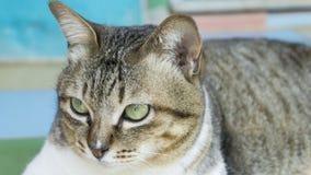 Fermez-vous et concentrez sur le visage de chat Photographie stock
