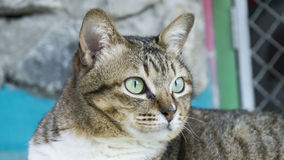 Fermez-vous et concentrez sur le visage de chat Photographie stock libre de droits