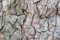 Fermez-vous fond en bois d'?corce de s?quoia du vieux photos stock