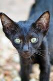 Le visage du chat Image stock