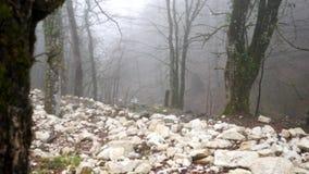 Fermez-vous pour le tronc d'arbre couvert de la mousse verte sur le fond brumeux de forêt, concept de mystère Longueur courante A clips vidéos