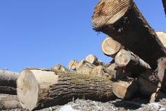 Fermez-vous sur Cedar Log Pile cru image stock