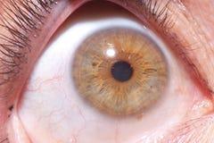 Fermez-vous sur l'iris de l'oeil Photographie stock libre de droits