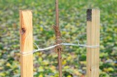 Fermez-vous sur la façon dont planter un arbre correctement avec deux enjeux photographie stock