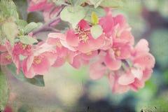 Fermez-vous sur la fleur de ressort avec le foyer mou - vieille photo Image stock