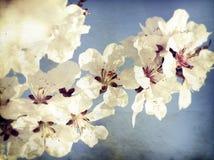 Fermez-vous sur la fleur de ressort avec le foyer mou - vieille photo Photos stock