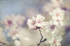 Fermez-vous sur la fleur de ressort avec le foyer mou - vieille photo Image libre de droits