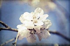 Fermez-vous sur la fleur de ressort avec le foyer mou - vieille photo Photos libres de droits