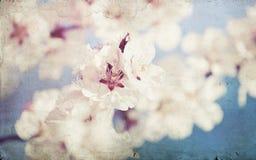 Fermez-vous sur la fleur de ressort avec le foyer mou - vieille photo Images stock