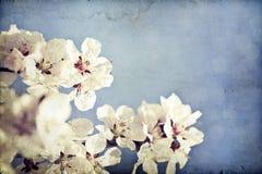 Fermez-vous sur la fleur de ressort avec le foyer mou - vieille photo Photo libre de droits