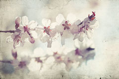 Fermez-vous sur la fleur de ressort avec le foyer mou - vieille photo Photographie stock